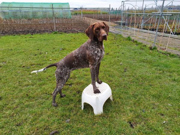 Hondenschool - soepel bewegen
